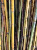 Textura de bambu do fundo da multi cor Imagem de Stock