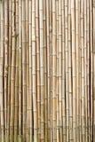 Textura de bambu do fundo em um formato vertical Foto de Stock