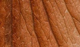 Textura de Brown Imagen de archivo