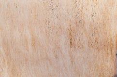 Textura de Brown Foto de Stock