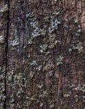 Textura de Brown de la cerca de madera imagenes de archivo