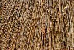 Textura de Brown de las pequeñas ramas secadas de la paja imágenes de archivo libres de regalías