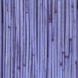 Textura de cañas o del bambú para el fondo Foto de archivo