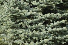 Textura de Christmass Foto de archivo libre de regalías