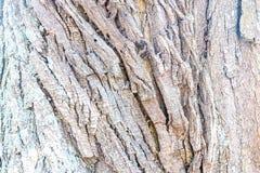 Textura de color claro de la corteza de árbol foto de archivo libre de regalías