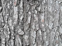 Textura de corteza de FN-arbol/skälltextur av ett träd royaltyfri bild