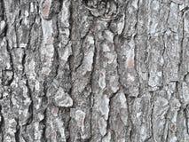 Textura de Corteza de UNO-arbol/Barkenbeschaffenheit eines Baums lizenzfreies stockbild