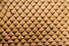 Textura de couro da serpente Imagem de Stock