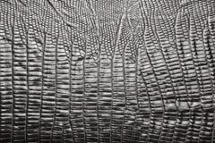 Textura de couro do crocodilo Fotografia de Stock
