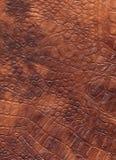 Textura de couro natural do réptil de Brown Dragon Skin imagens de stock