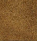 Textura de cuero de Brown Fotos de archivo