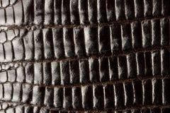 Textura de cuero del cocodrilo Fotos de archivo