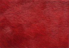 Textura de cuero roja Imagen de archivo