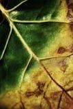 Textura de DetailedLeaf imagem de stock