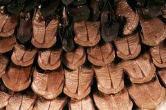 Textura de escalas del cono del pino Imagen de archivo