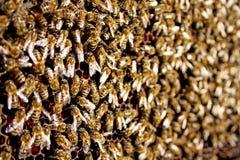 Textura de fabricación ocupada de la miel de las abejas de la miel Fotos de archivo libres de regalías