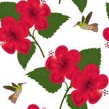 Textura de florescência do hibiscus e dos colibris Imagem de Stock Royalty Free