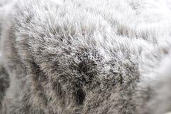 Textura de Grey Puffy Fabric Background fotografia de stock