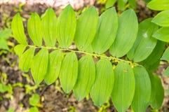 Textura de hojas verdes en luz del sol fotografía de archivo libre de regalías