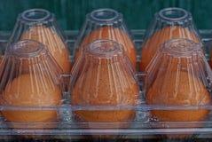 Textura de huevos marrones frescos en envase de plástico cerrado transparente imagenes de archivo