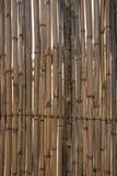 A textura de juncos amarelos seca como uma barreira Imagem de Stock