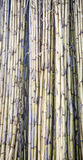A textura de juncos amarelos seca como uma barreira Fotos de Stock