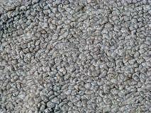Textura de la alfombra   Fotos de archivo