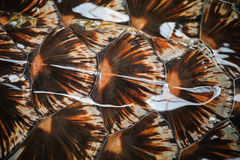 Textura de la cáscara del fondo del caparazón de la tortuga imagenes de archivo