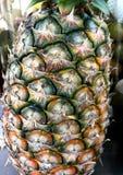 textura de la cáscara de la piña Foto de archivo libre de regalías