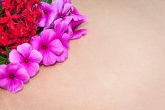 Textura de la cartulina en el fondo con las flores y las rosas rojas en esquinas Imagen de archivo libre de regalías