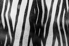 Textura de la cebra Fotografía de archivo