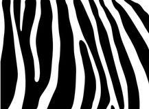 Textura de la cebra Imágenes de archivo libres de regalías
