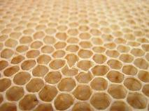 Textura de la cera de abejas sin la miel Foto de archivo libre de regalías