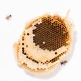 Textura de la cera de la abeja en el fondo blanco Foto de archivo libre de regalías