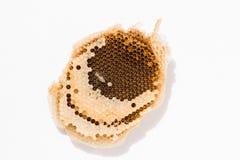 Textura de la cera de la abeja en el fondo blanco Fotografía de archivo libre de regalías