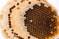 Textura de la cera de la abeja en el fondo blanco Fotos de archivo