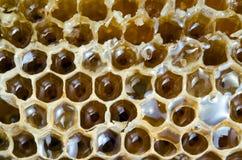 Textura de la colmena de la abeja con la miel llenada Imagenes de archivo