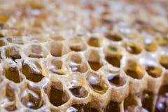 Textura de la colmena de la abeja con la miel llenada Fotografía de archivo
