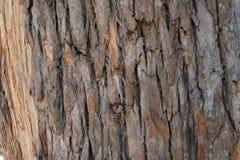 Textura de la corteza de árbol de Brown Fotos de archivo libres de regalías