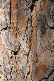 Textura de la corteza de árbol de Brown en el jardín Imágenes de archivo libres de regalías