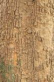 Textura de la corteza de árbol del palo fotos de archivo