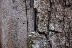 Textura de la corteza de árbol en un árbol de abedul fotos de archivo
