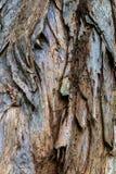 Textura de la corteza de árbol, imagen de fondo tomada en la isla de Oahu foto de archivo