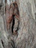 Textura de la corteza de árbol, papel pintado del fondo de la creación de la naturaleza imágenes de archivo libres de regalías