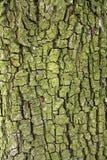 Textura de la corteza Imagen de archivo