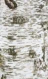 Textura de la corteza Foto de archivo libre de regalías