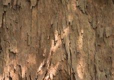 Textura de la corteza Foto de archivo