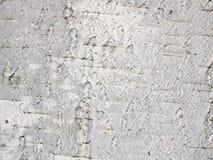 Textura de la corteza de abedul Foto de archivo