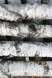 Textura de la corteza de abedul como fondo de madera natural Foto de archivo libre de regalías