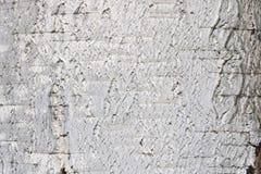 Textura de la corteza de abedul para el fondo natural Imágenes de archivo libres de regalías